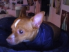 I ♥ My Doberman's Avatar